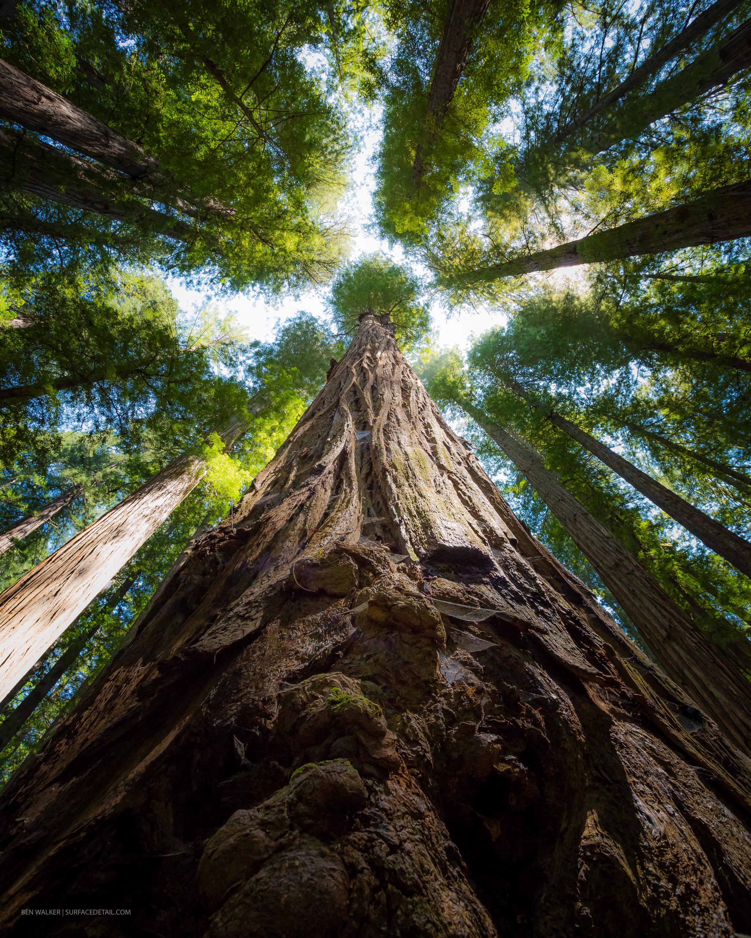 USA_Forest-10.jpg