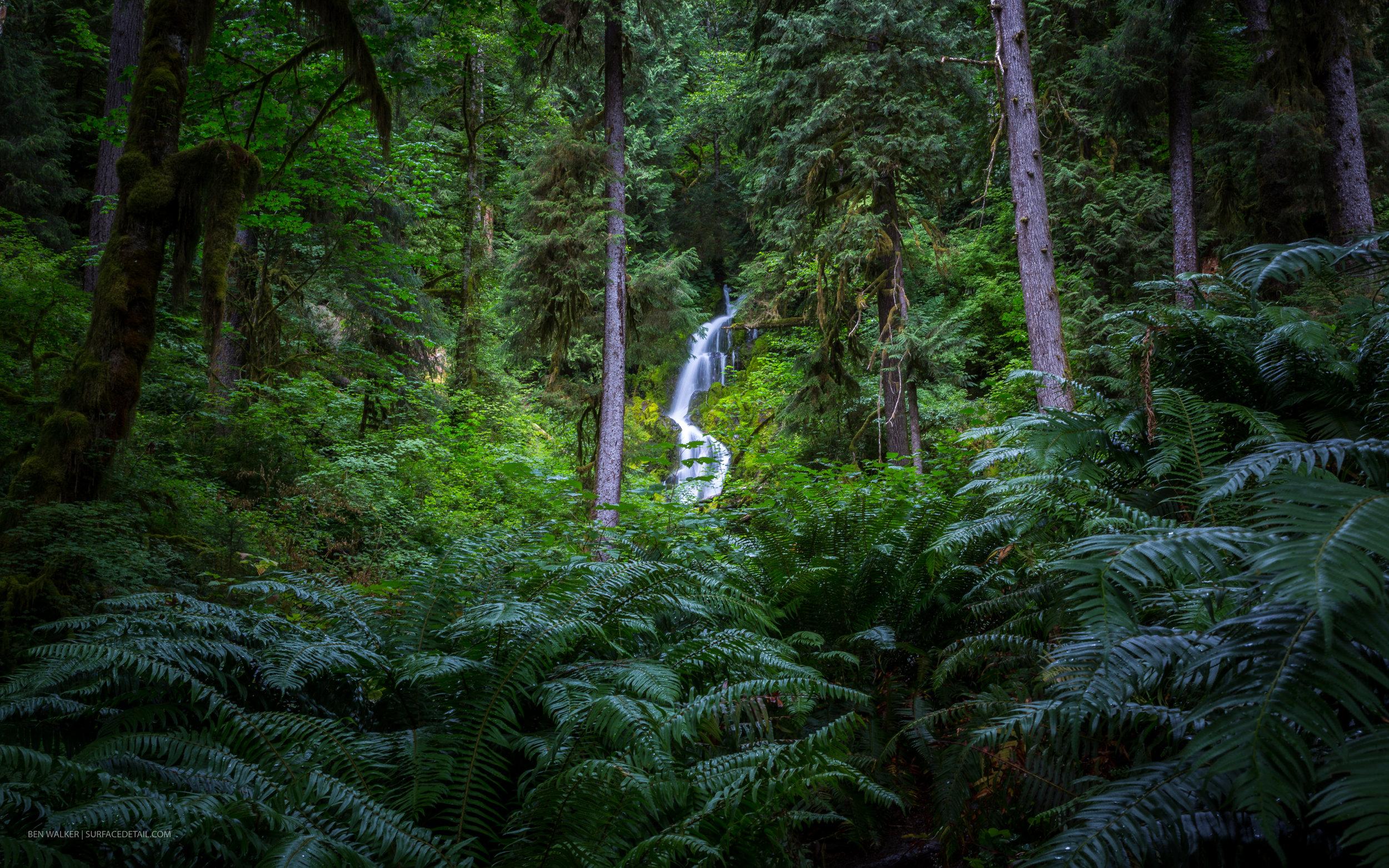 USA_Forest-6.jpg