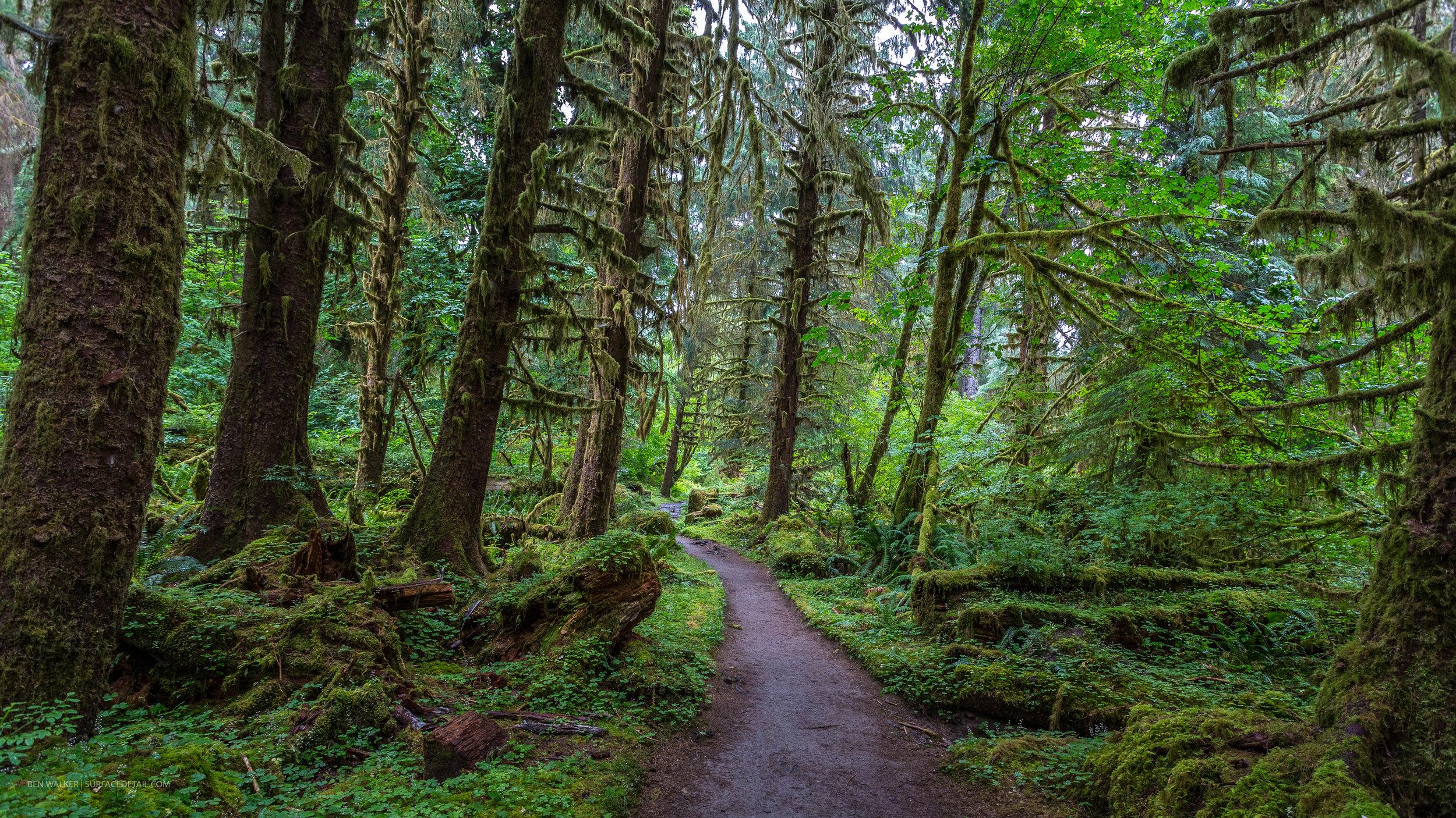 USA_Forest-1.jpg