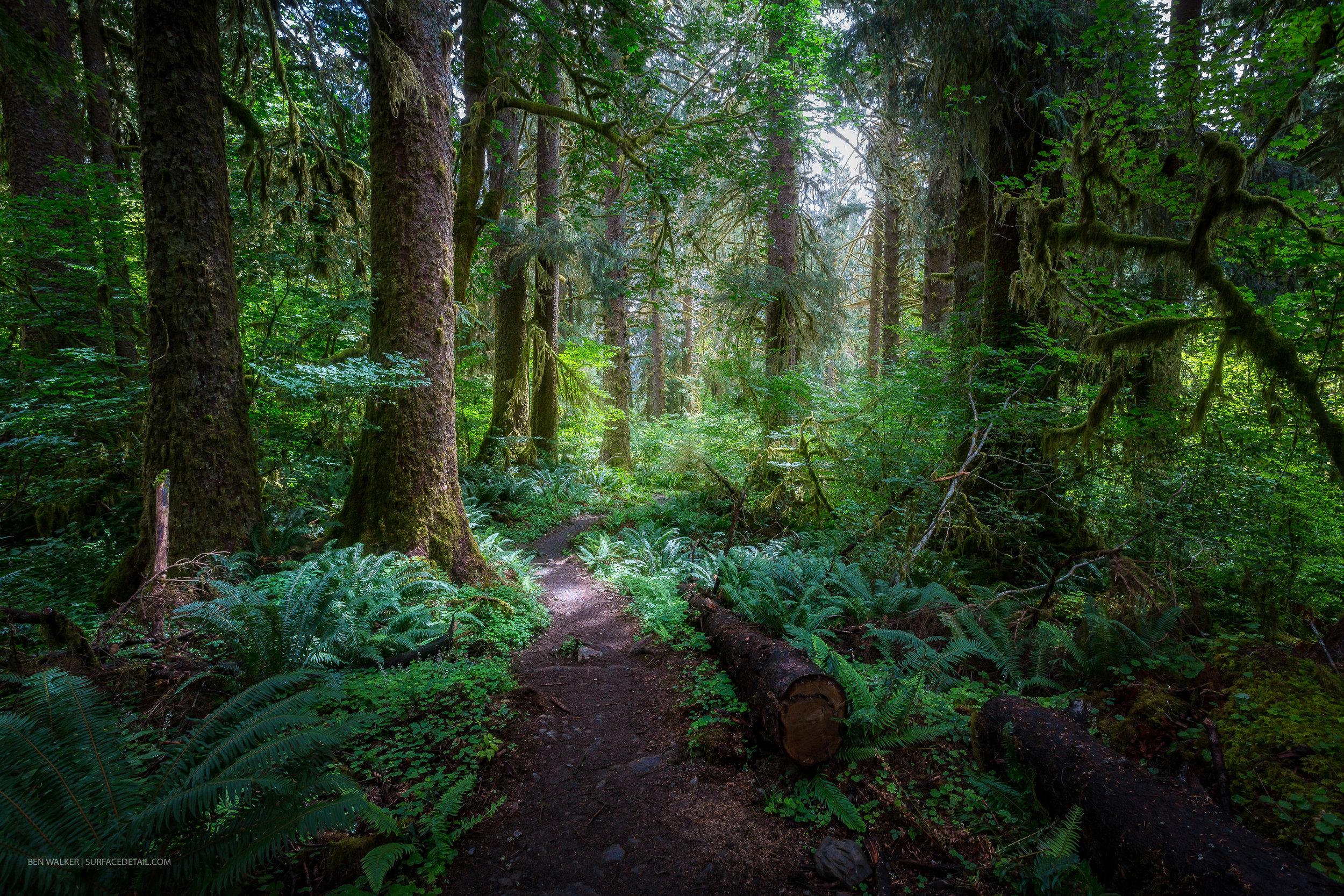 USA_Forest-7.jpg