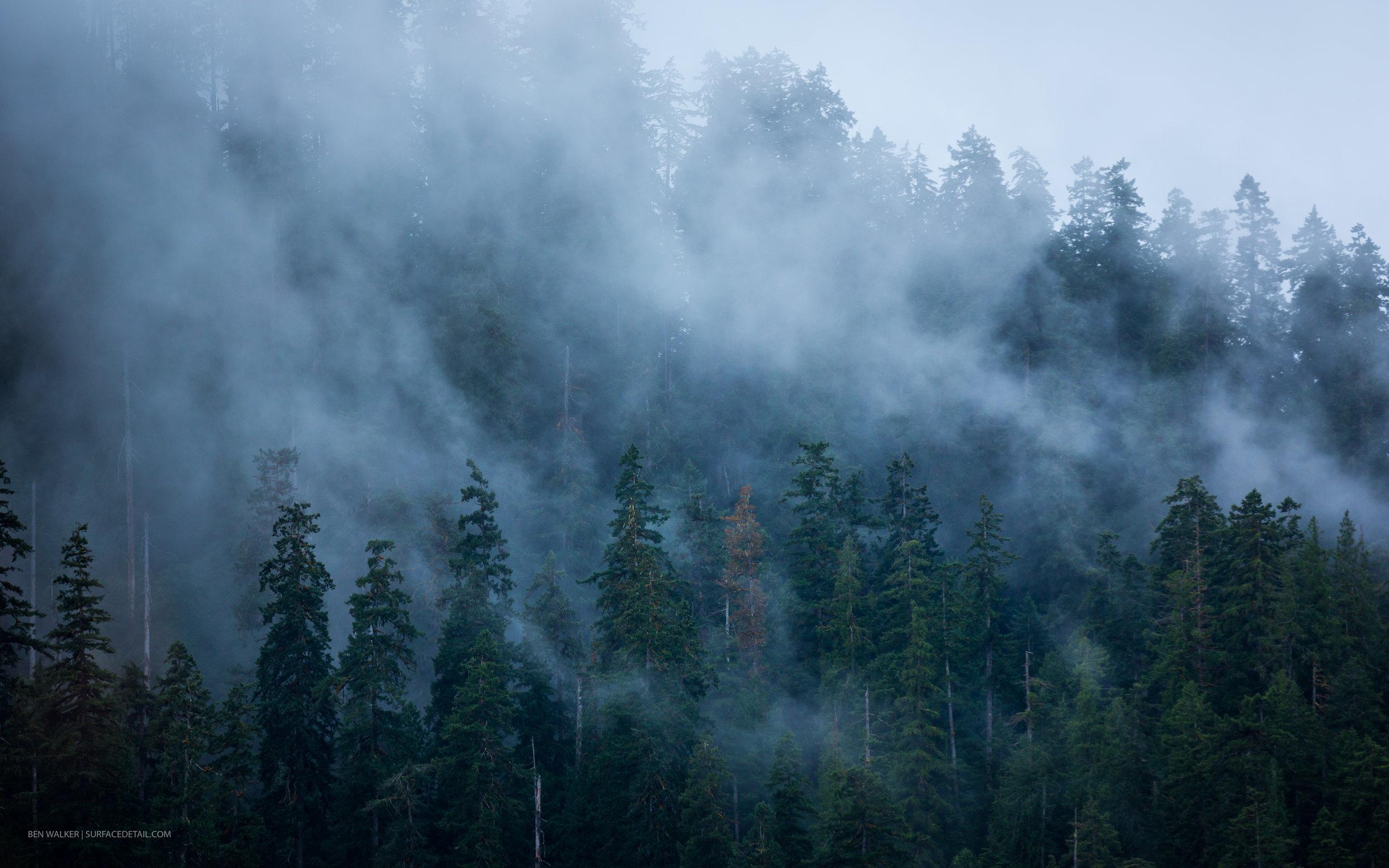 USA_Forest-2.jpg