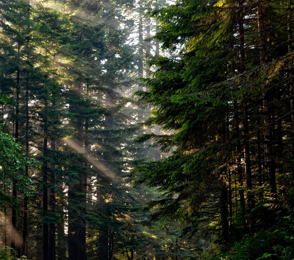 forest-1598756-e1553590208481.jpg