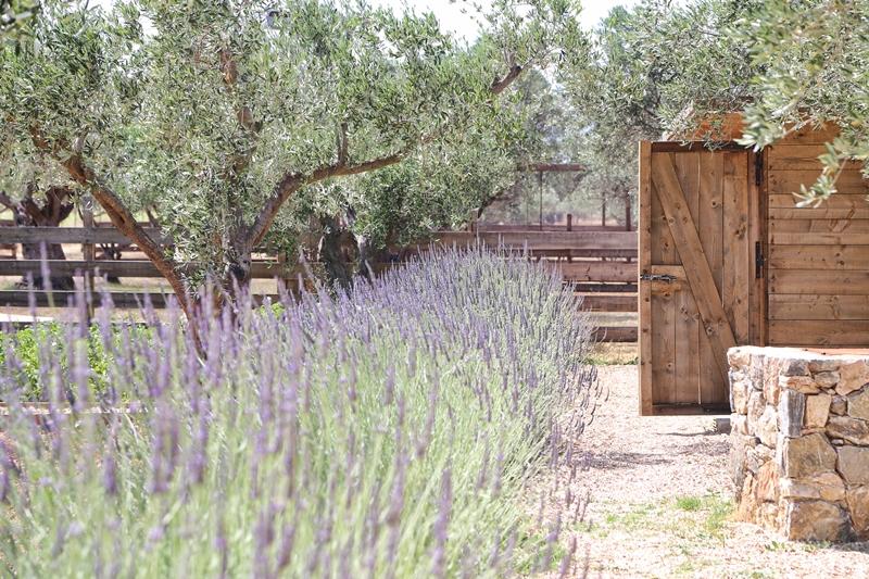 The beautiful setup of the Margi Farm (Picture courtesy of Margi Farm)