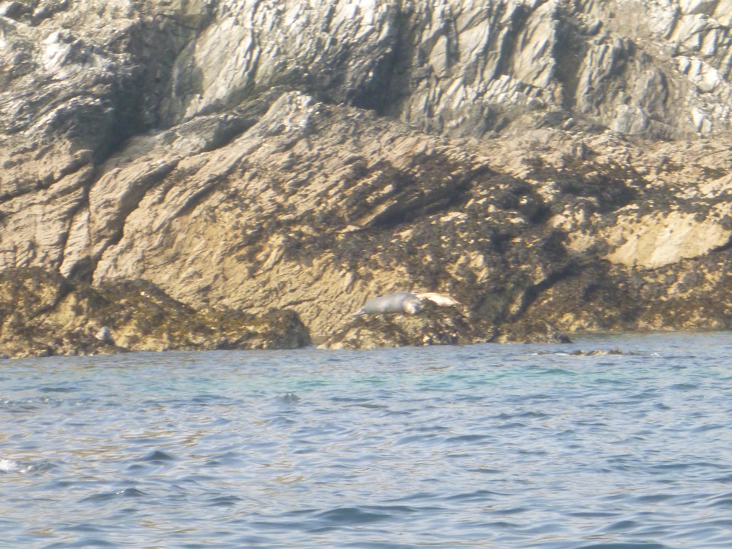 Seal Spotting Newquay