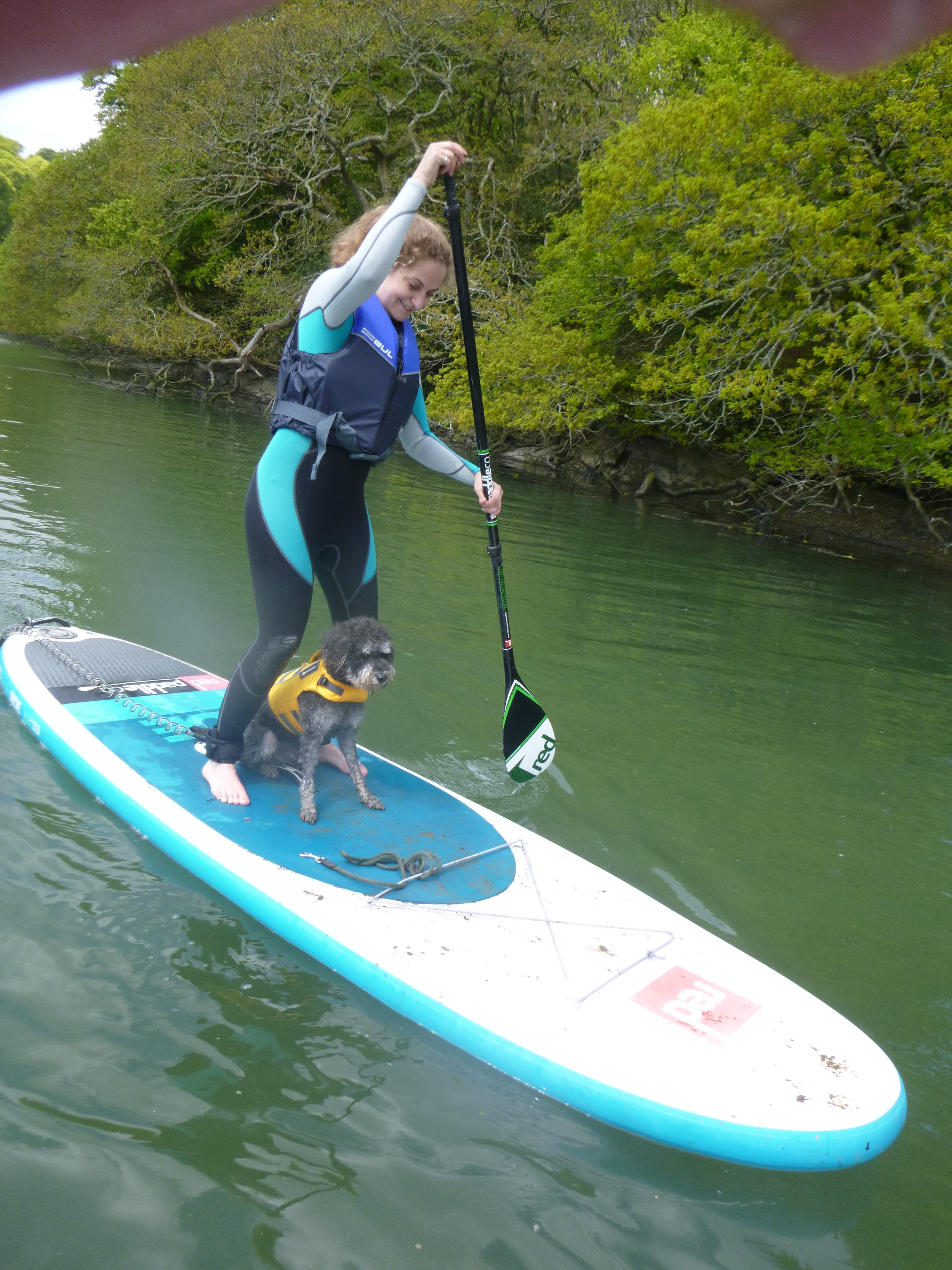 SUP Dog the River Fal
