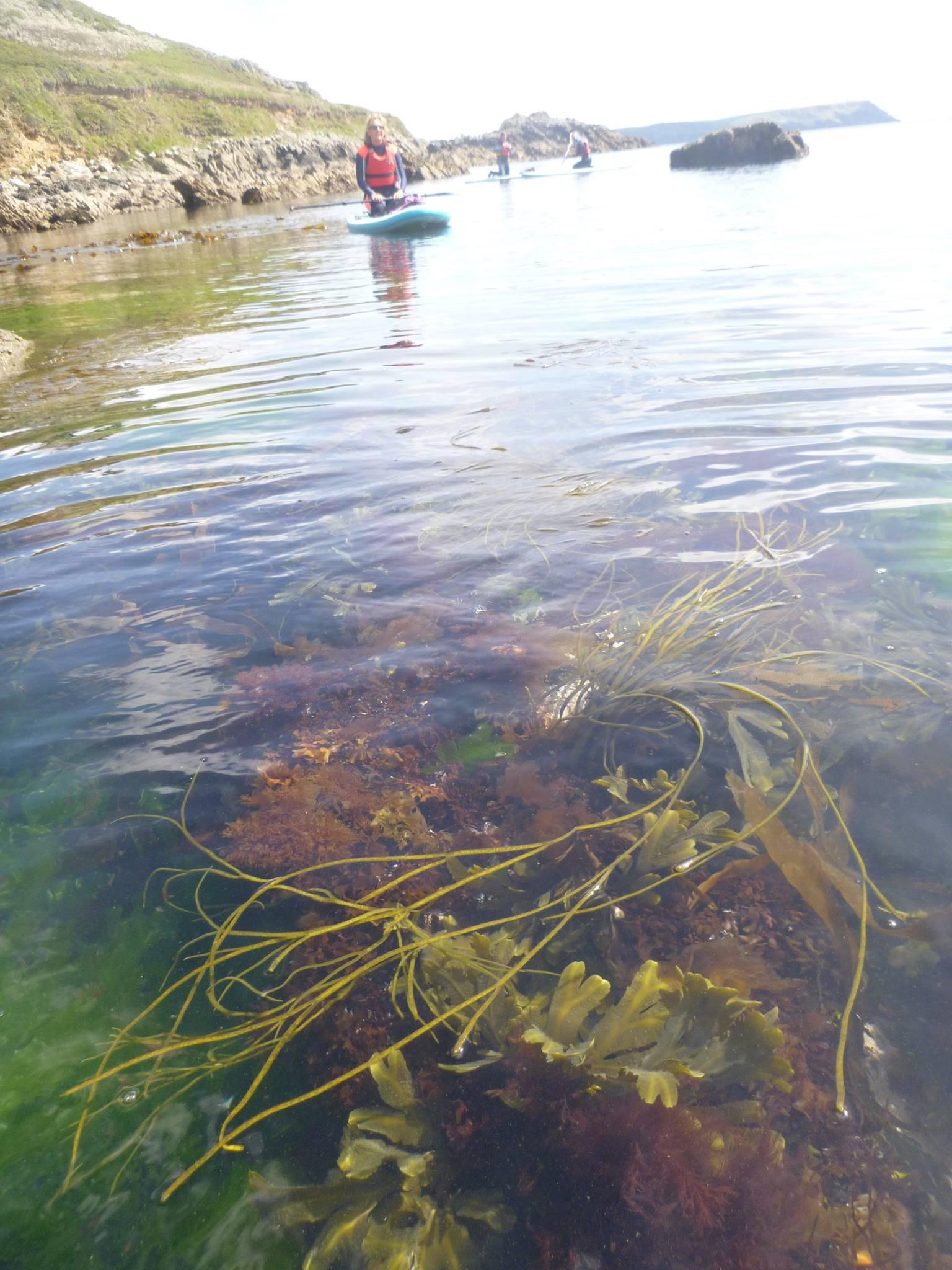 low-tide-paddle-roseland