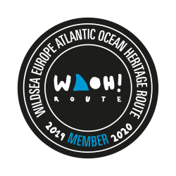 woah-eco-tourism-paddleboarding