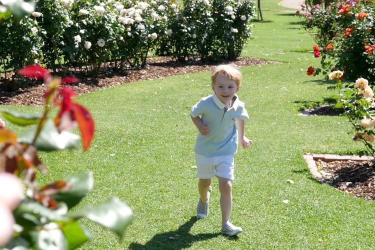 roses11.jpg