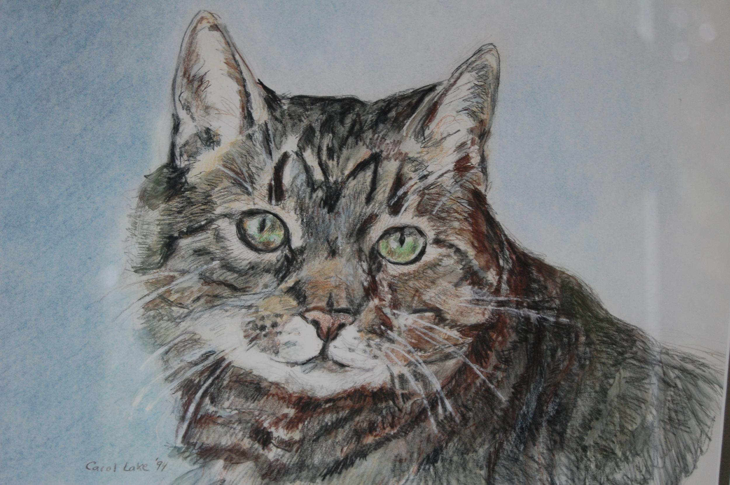 Gina's Cat.JPG
