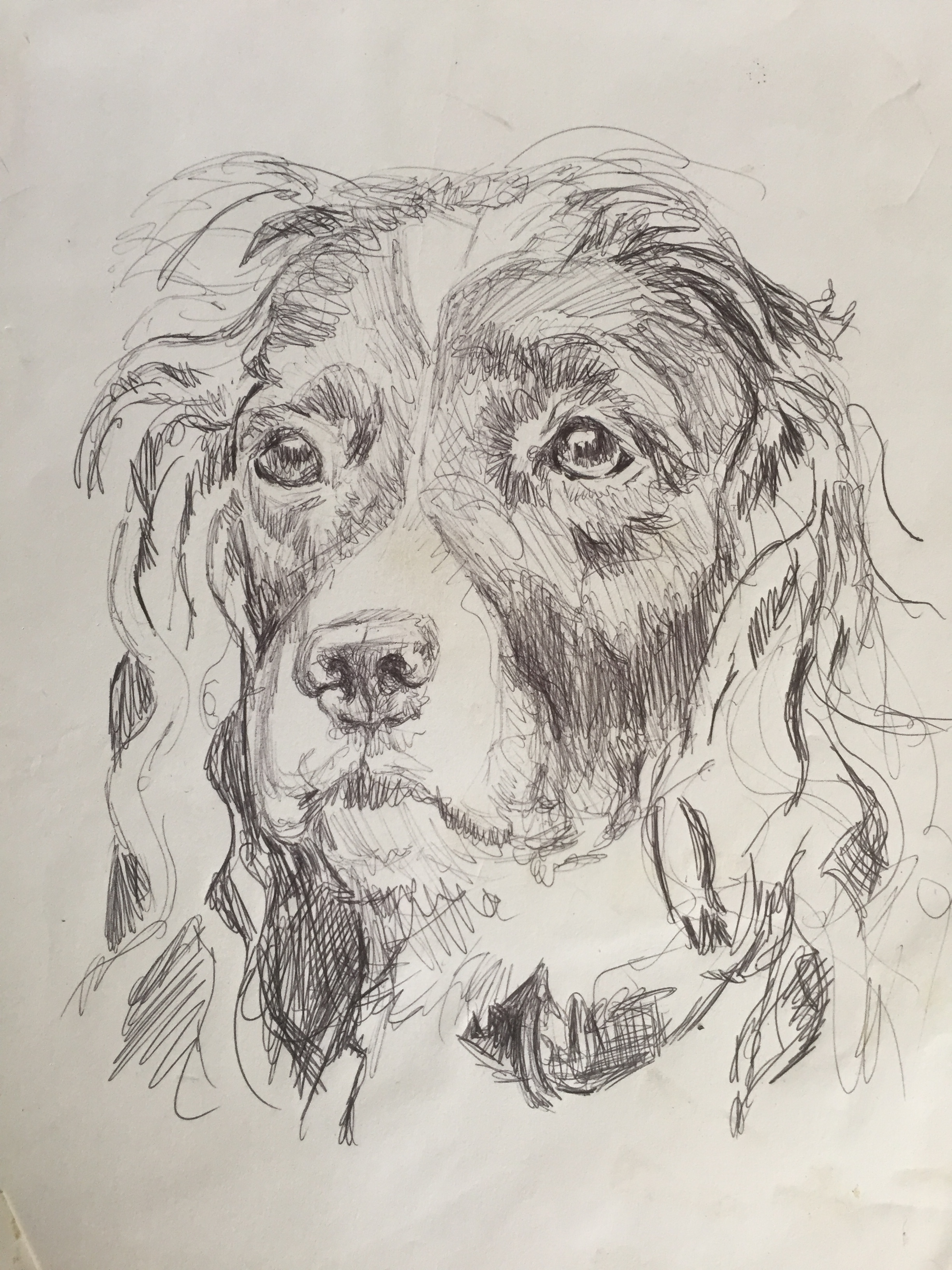 dog sketch.jpeg