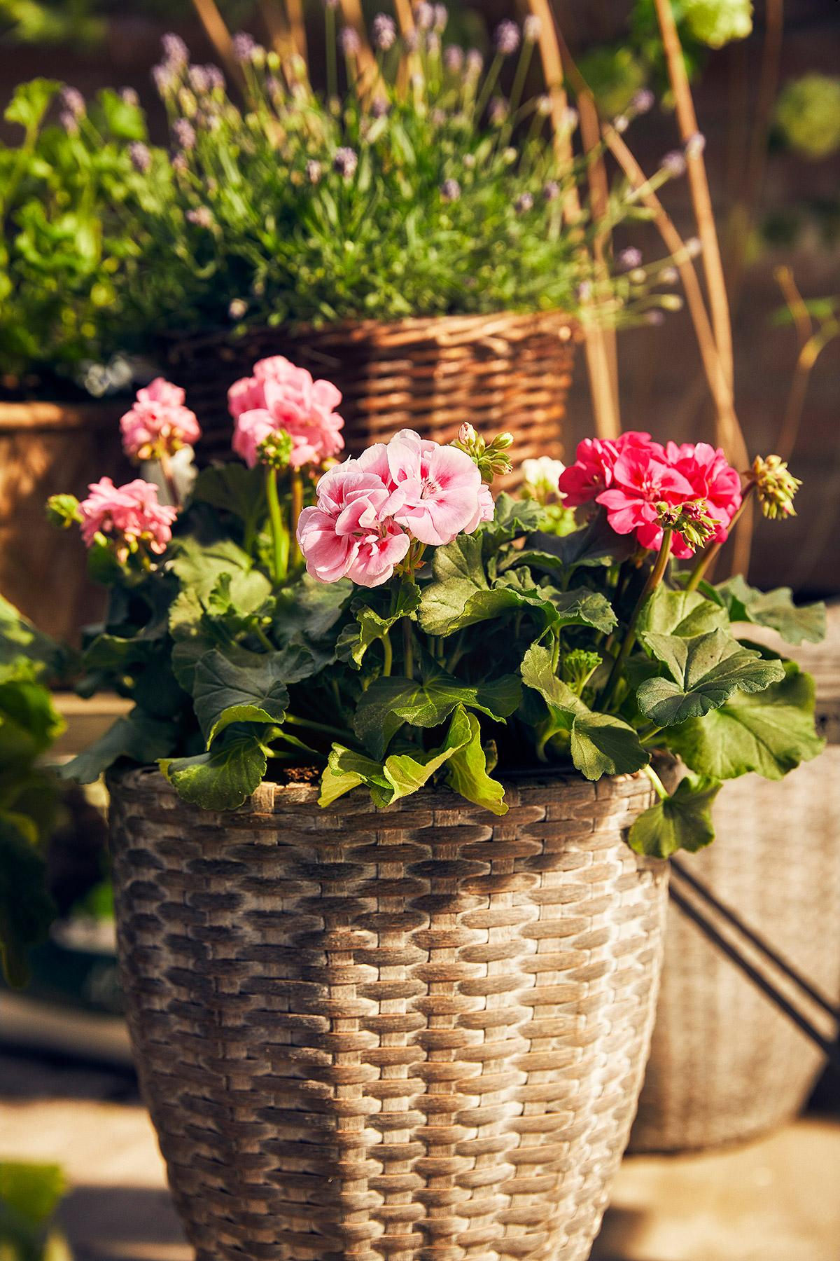 Blomsterlandet_Gerilla_10011_MINT.jpg
