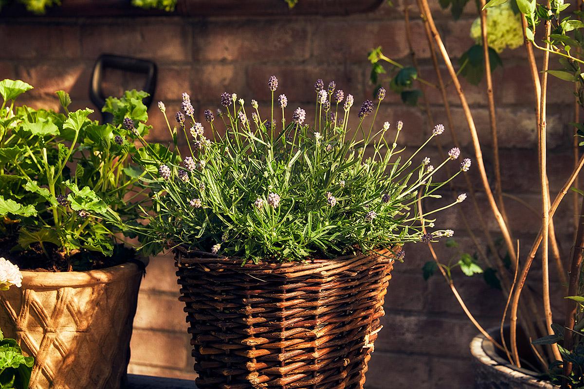 Blomsterlandet_Gerilla_10024_MINT.jpg