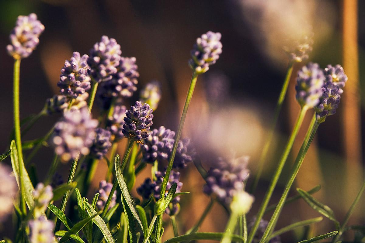 Blomsterlandet_Gerilla_10066_MINT.jpg