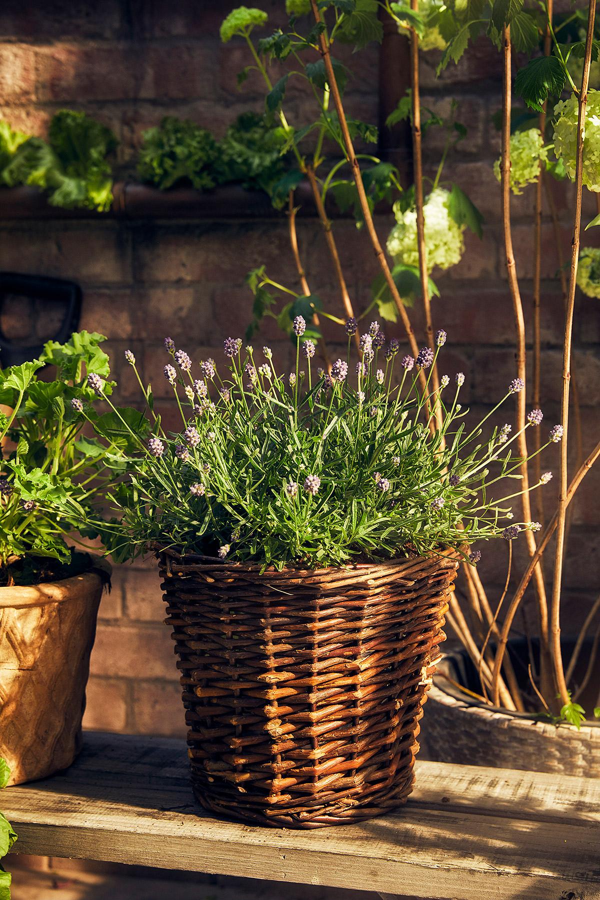 Blomsterlandet_Gerilla_10029_MINT.jpg