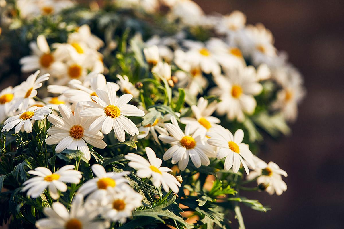 Blomsterlandet_Gerilla_10166_MINT.jpg