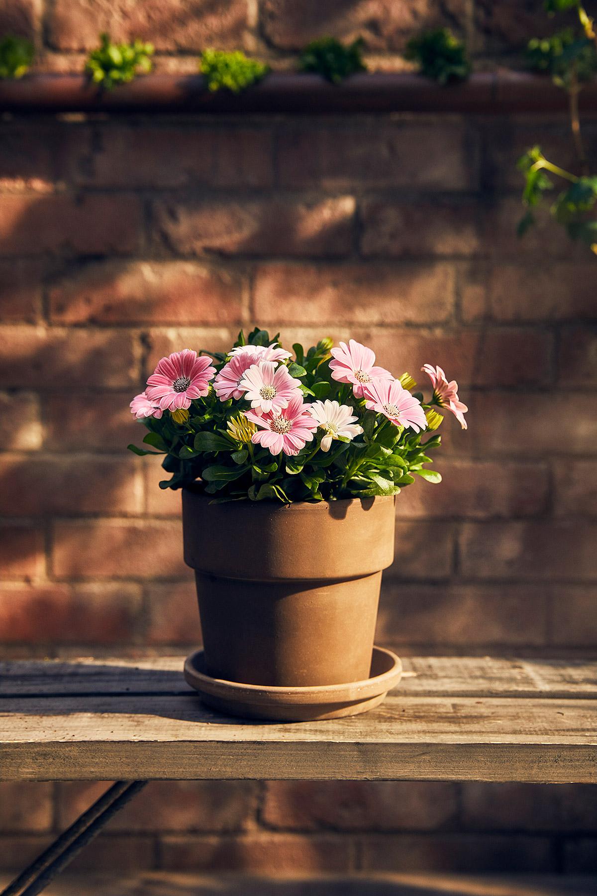 Blomsterlandet_Gerilla_10246_MINT.jpg