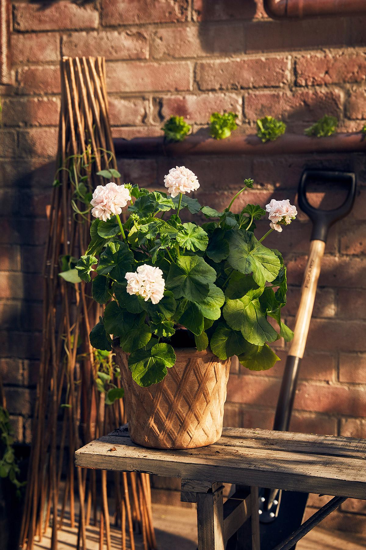 Blomsterlandet_Gerilla_10265_MINT.jpg