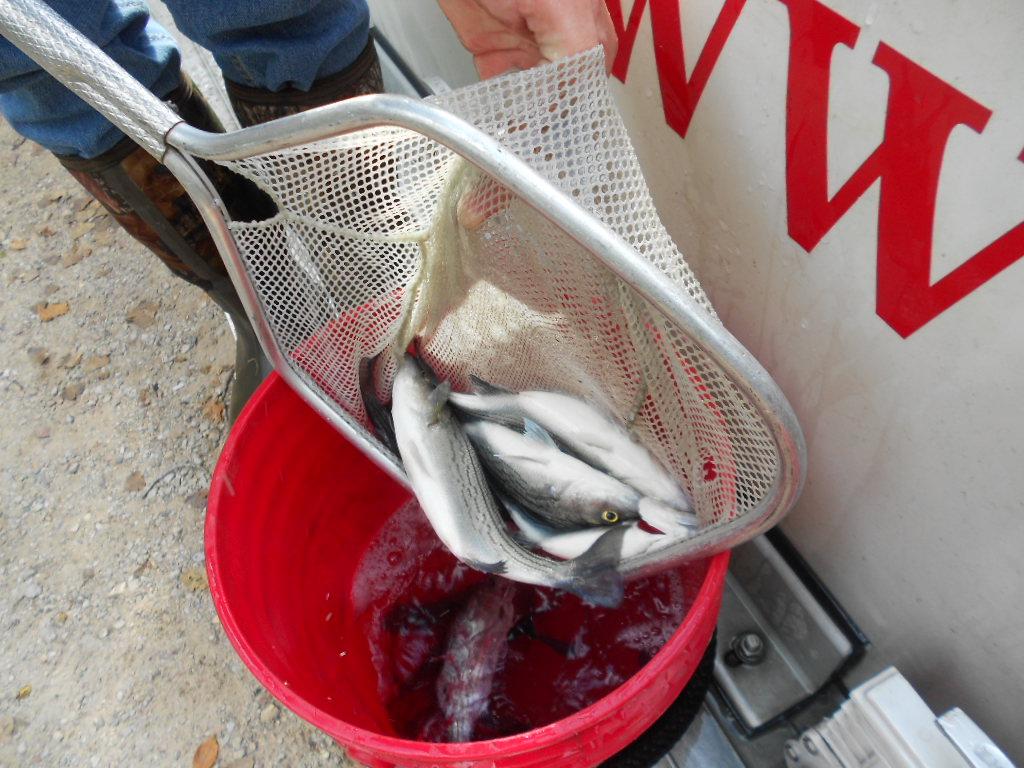 IWL Fish Stocking Photos (10-15-15) JCS 021.jpg