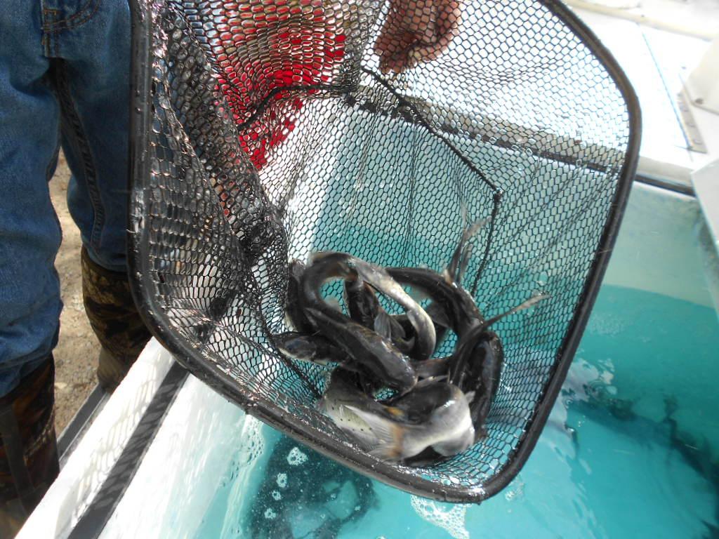 IWL Fish Stocking Photos (10-15-15) JCS 049.jpg