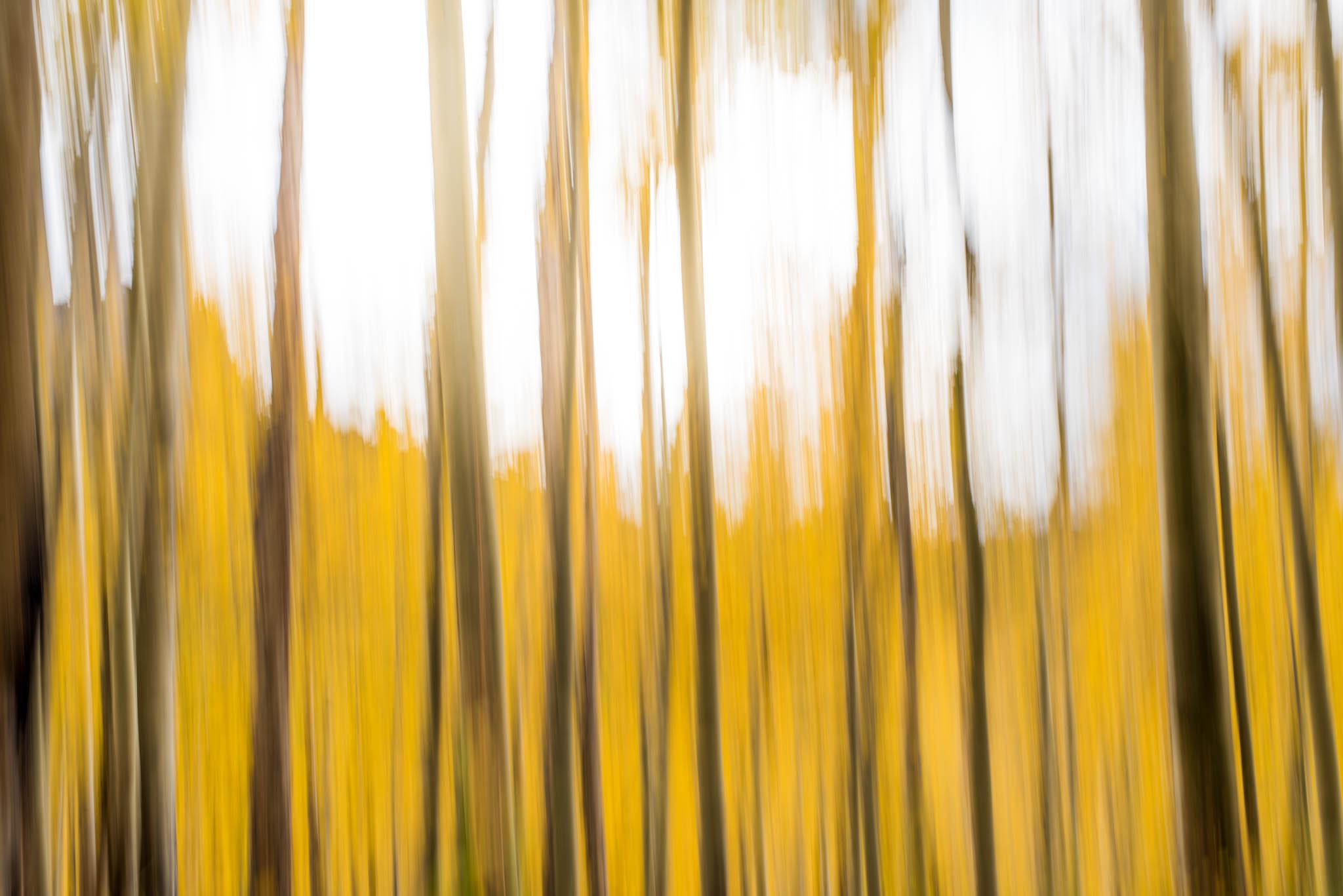 Aspen-Lines-1.jpg
