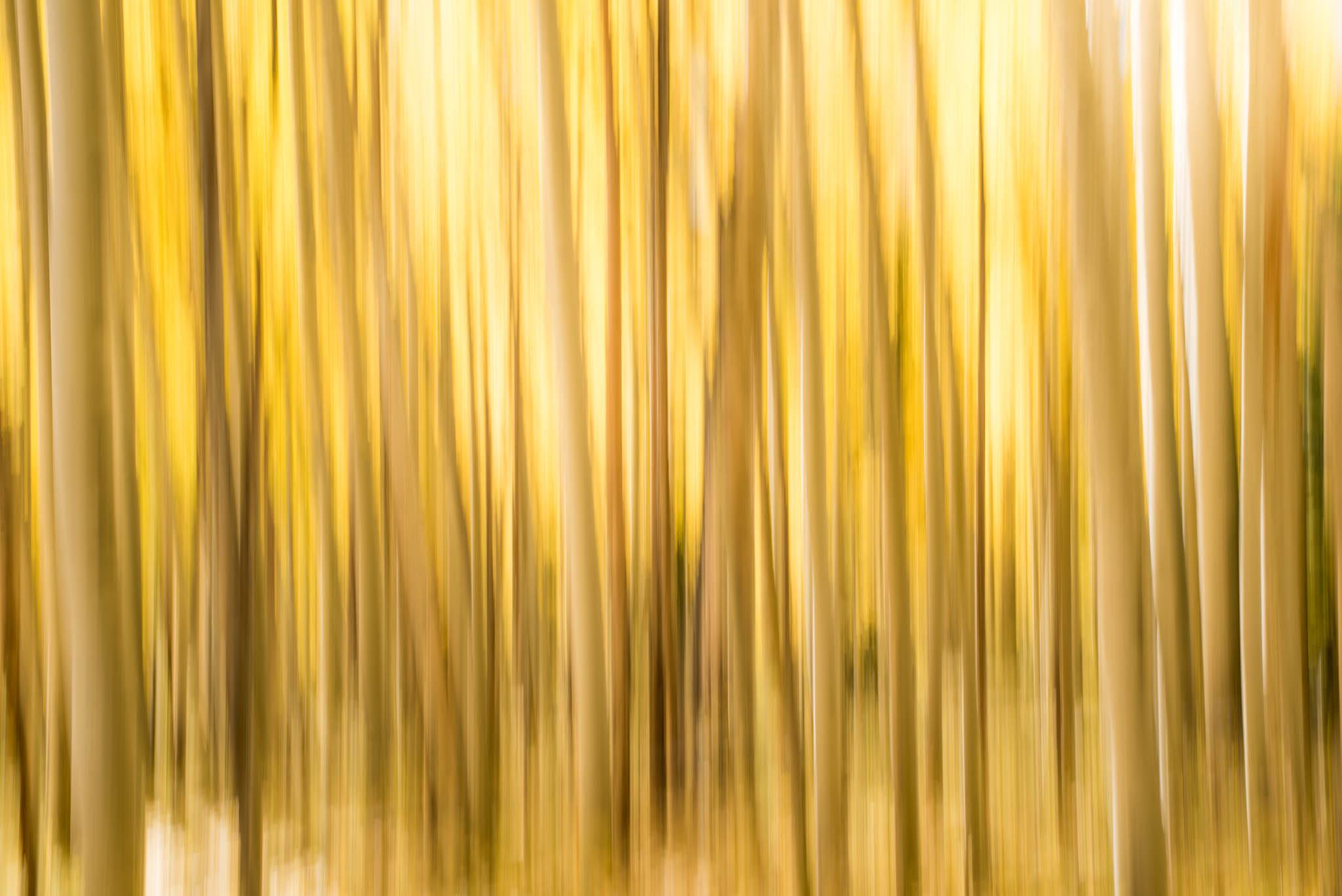 Aspen-Lines-4.jpg