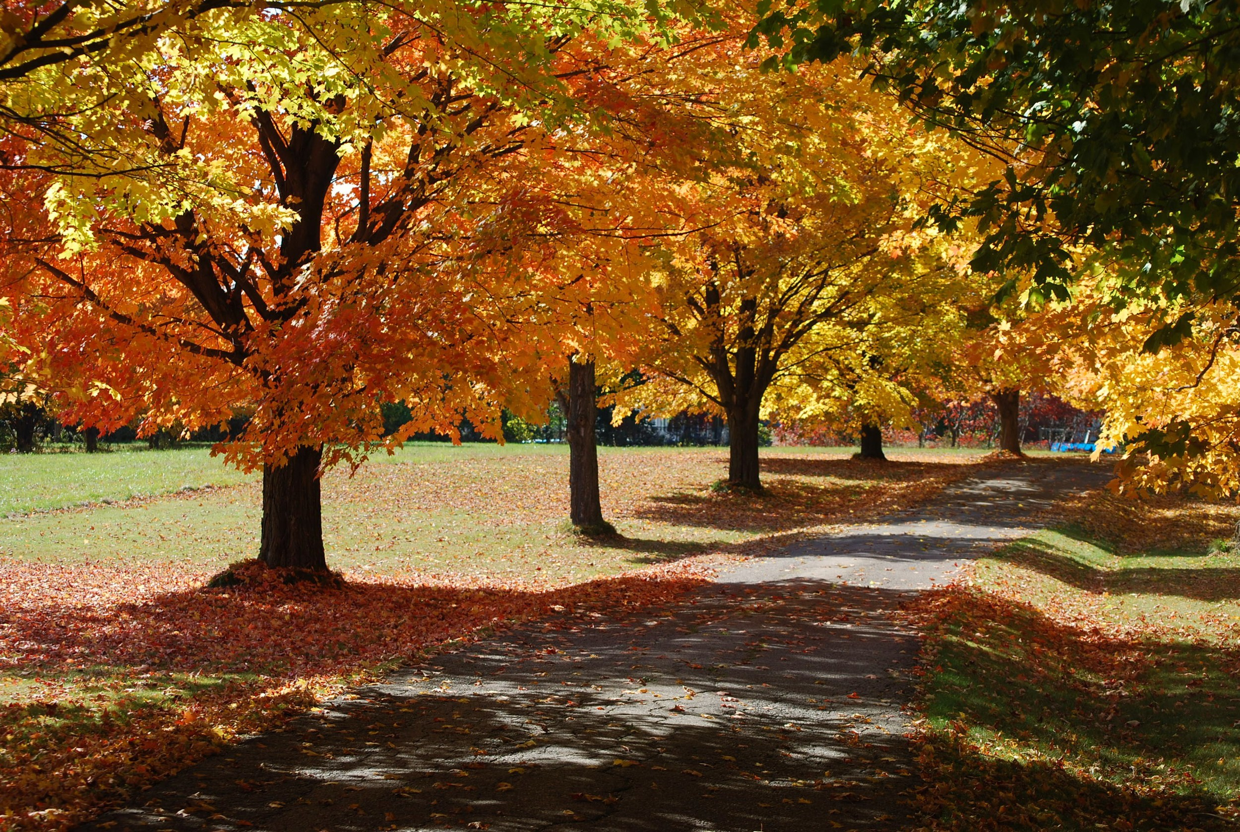 Fall driveway.JPG