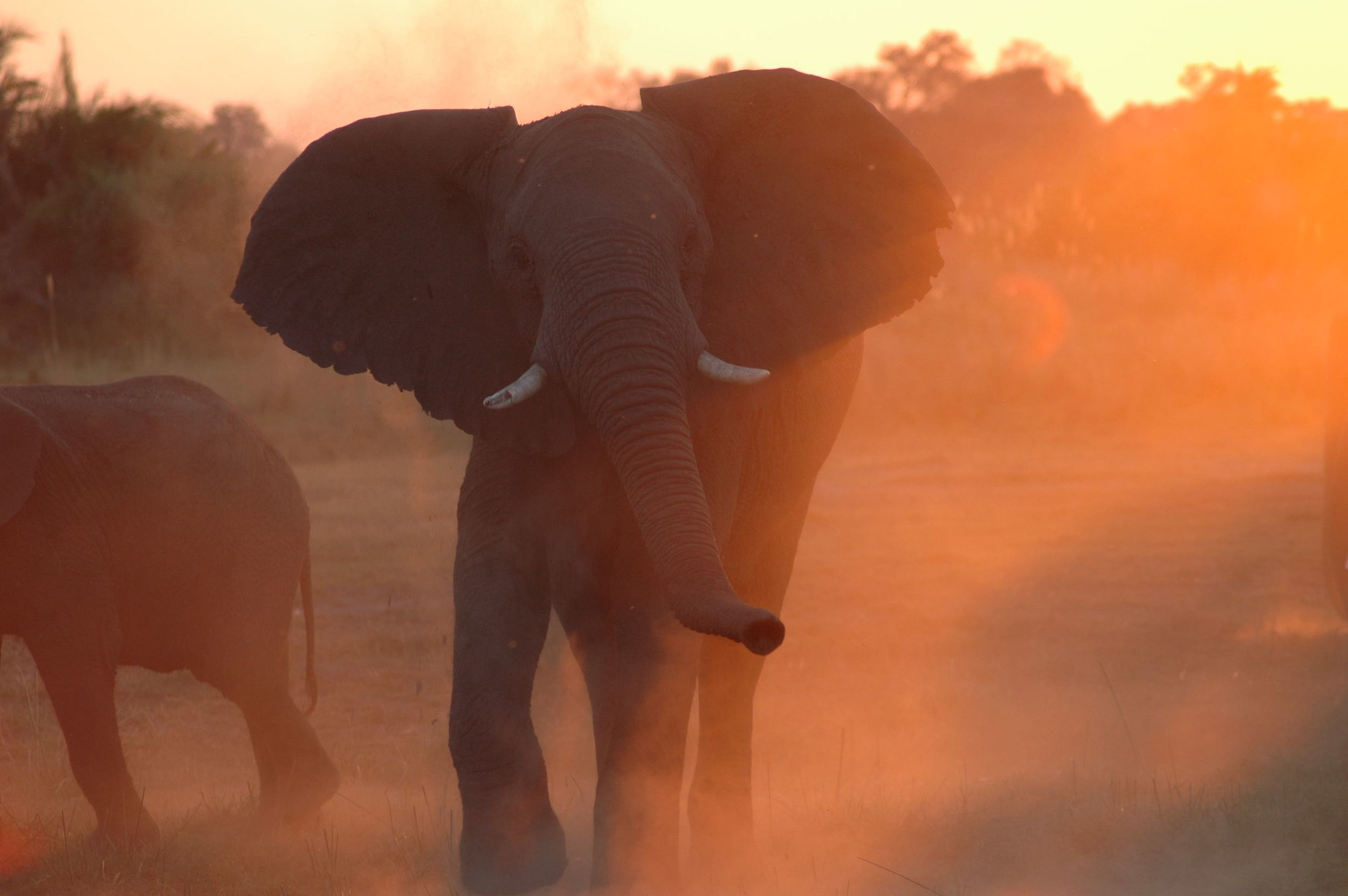 BotswanaSafari.jpg
