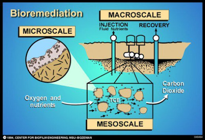 Caption: Microbial Remediation [11]