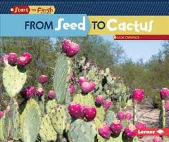 From Seed to Cactus.jpg