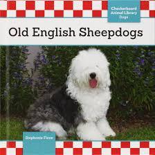 Old English Sheepdogs.jpg