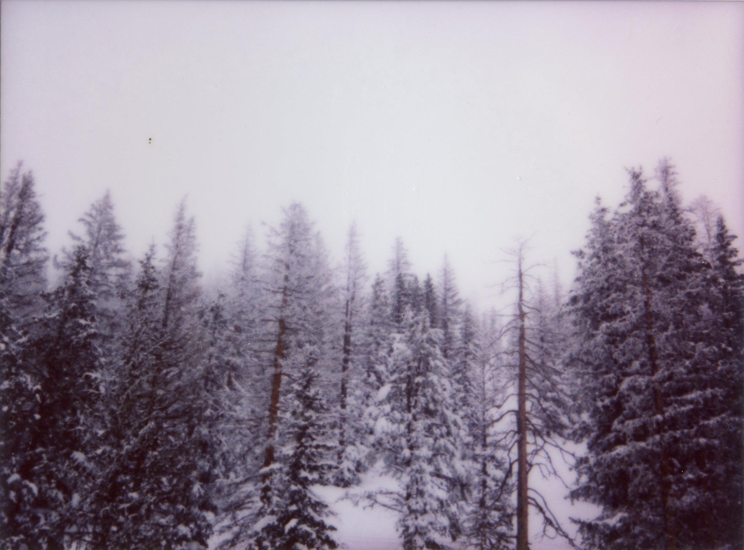 white005.jpg