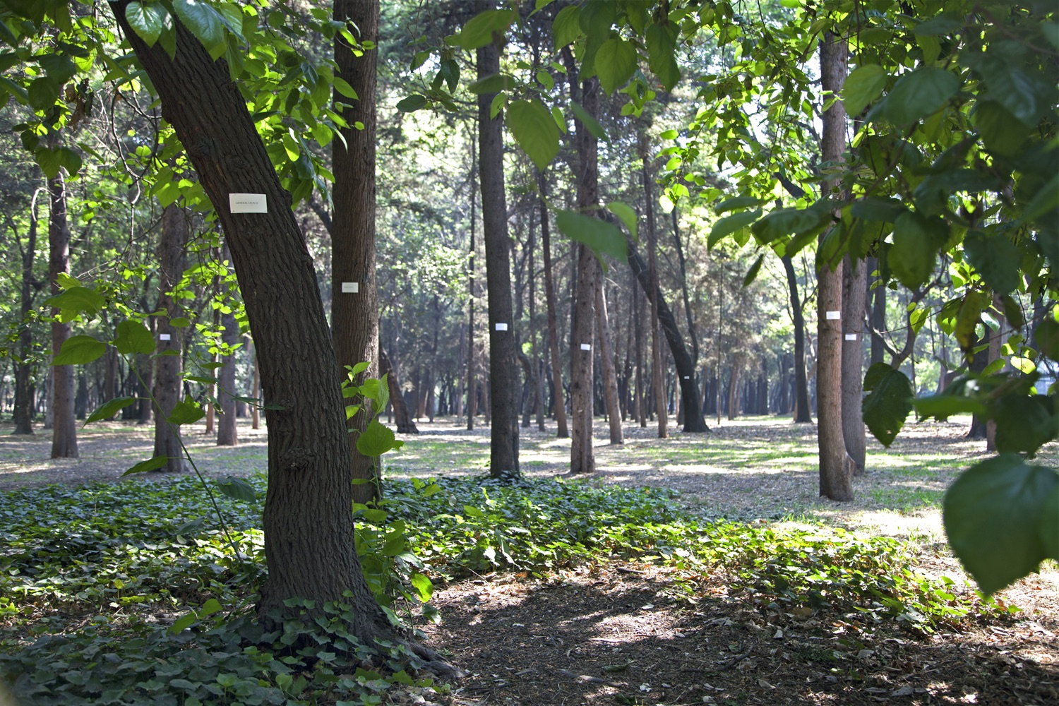 Bosque 9 copia.jpg