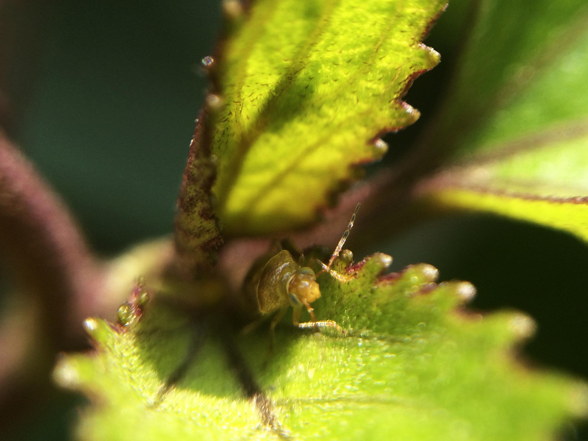Diptera II.jpg