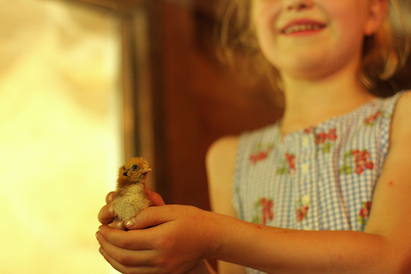 Living Our Dream at GeerCrest Farm - Frontier Dreams Blog | July 2013