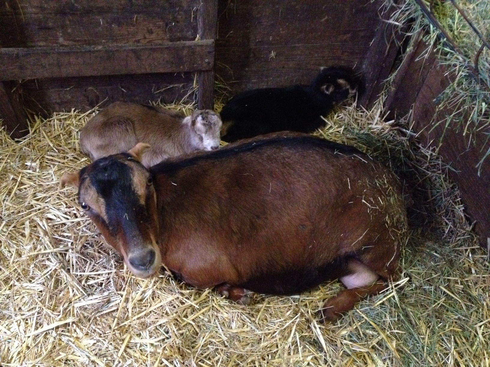 Eula and her twins in their first days