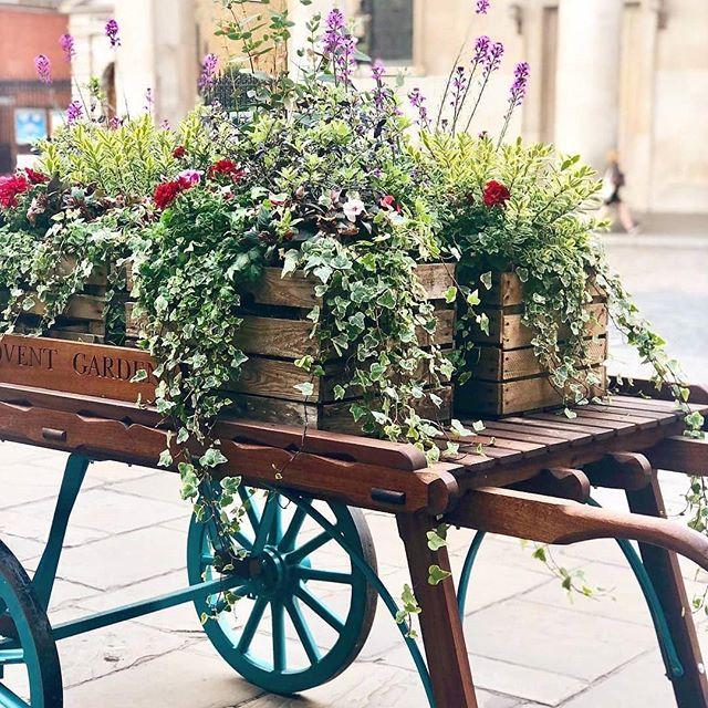 #Repost @thecoventgardener ・・・ Covent Garden 🌺 . . . #coventgarden #flowers #chelseafringe #florist #thecoventgardener #summer #lovelondon #london #timeoutlondon #headgardener #gardendisplay