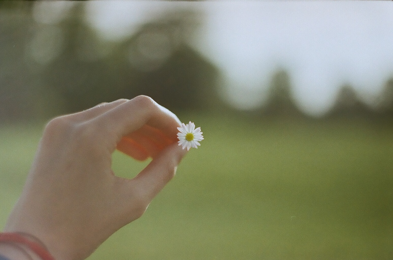florist fleuriste belgium.jpg