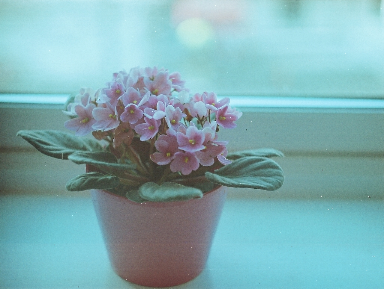 flower plant belgium florist.jpg