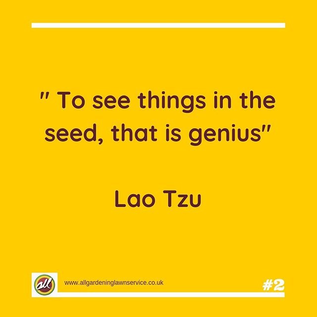 The greatest ideas form from the smallest seed  #quotestoliveby #quotesaboutlife #quoteoftheday #lawnlove #gardenlove