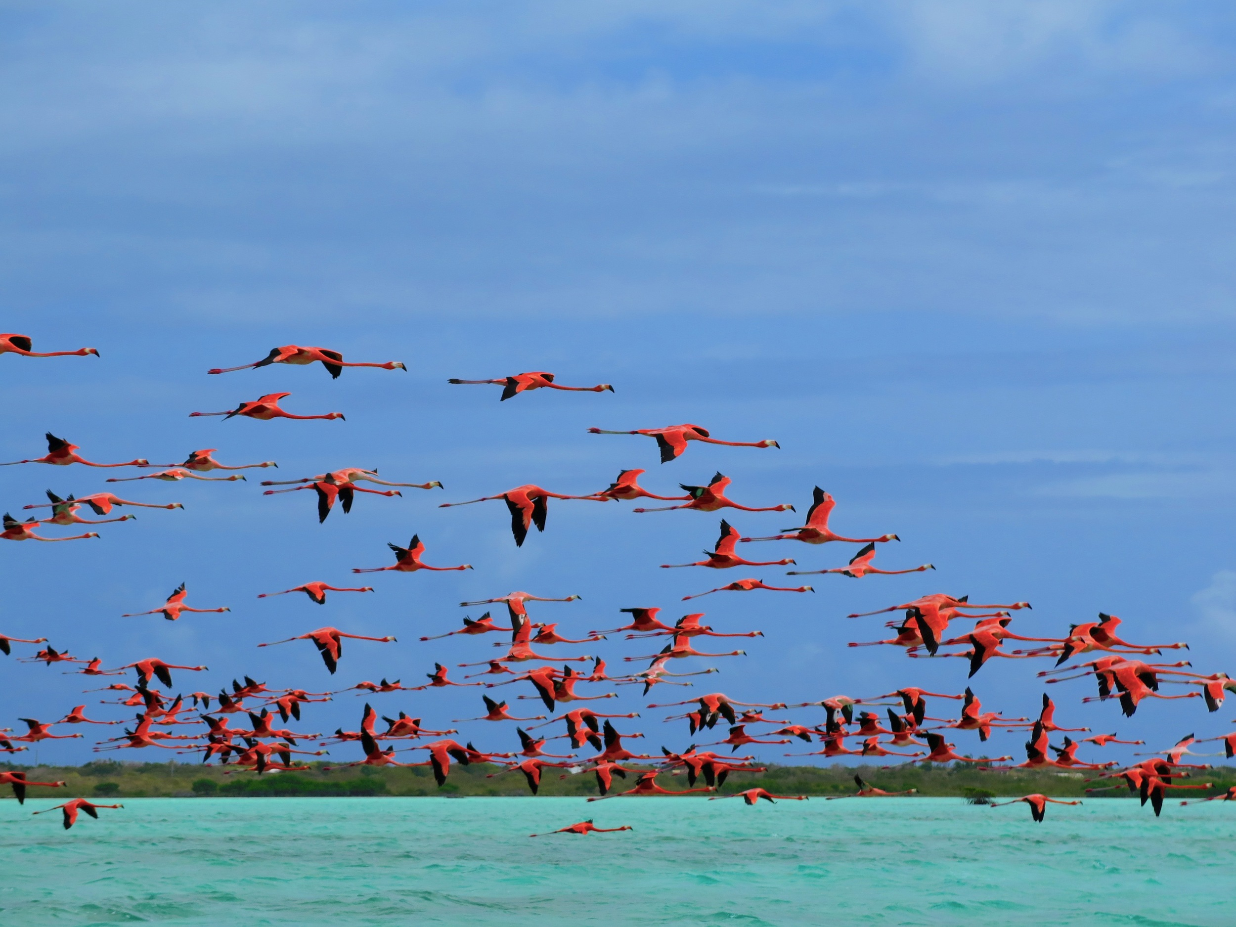 Wild Flamingos made for an exciting site on Anegada! What funny pink birds.