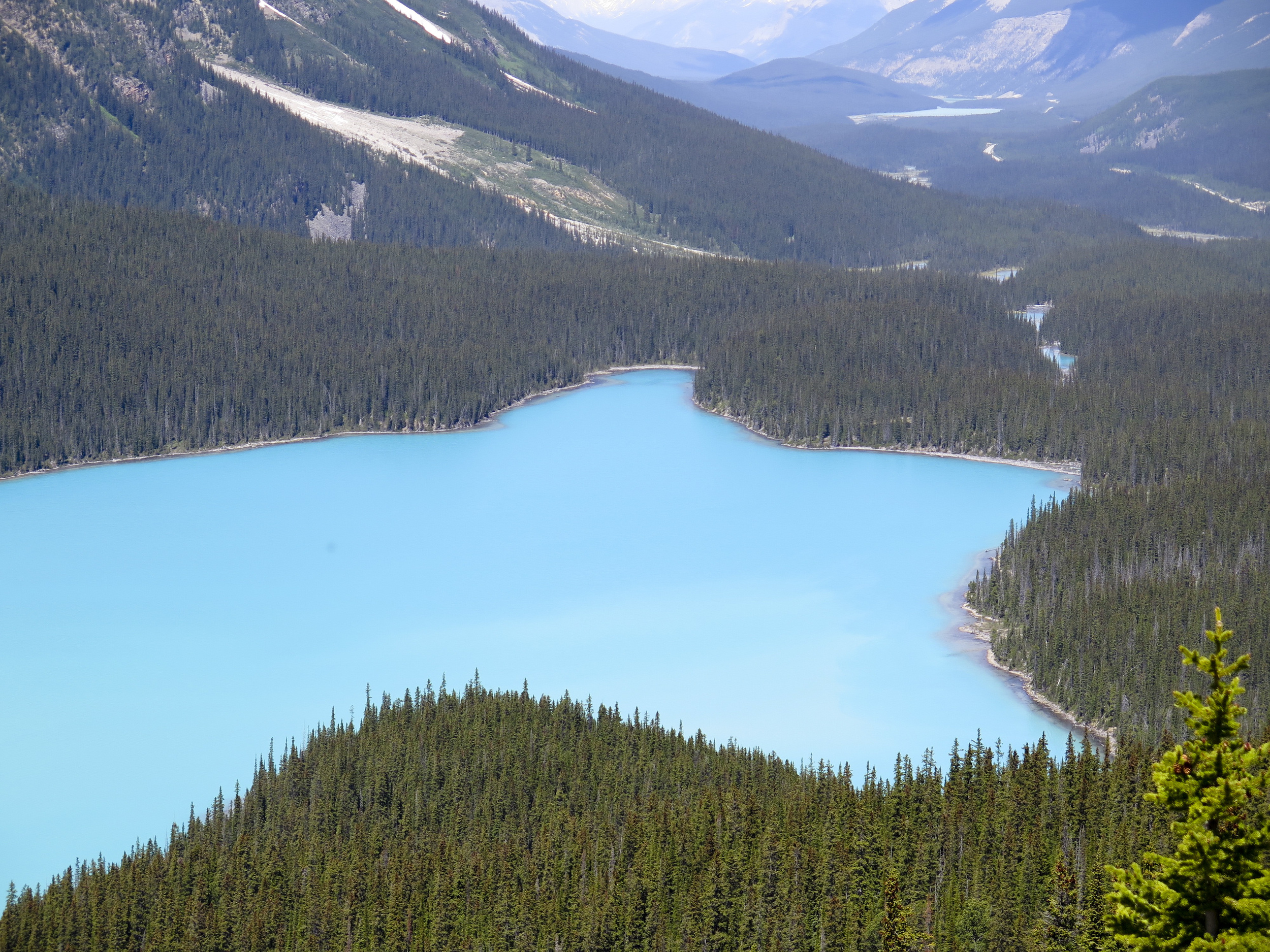 This is Peyto Lake, perfectly aqua and perfectly shaped like a wolf.