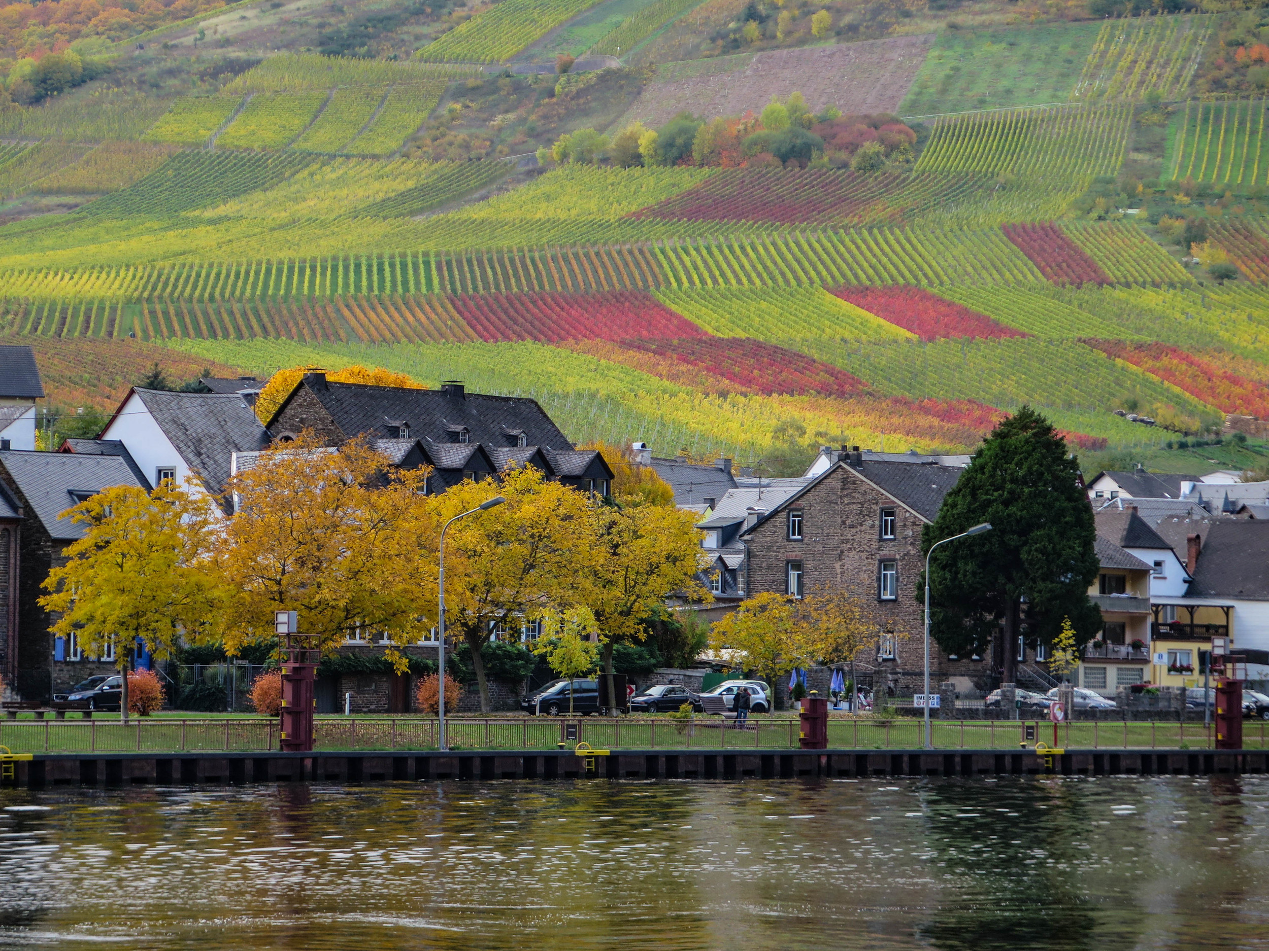 It was great to see the different colors of the vineyards in fall.