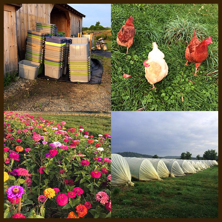 Windflower farm weekend.jpg
