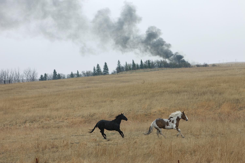 Horses  Near Keene, ND. 2012
