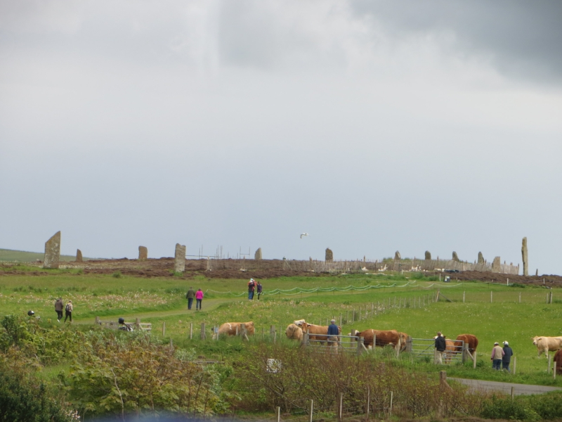 The best shot i have of the Ring of Brodgar.  The cows make it official. ;-)