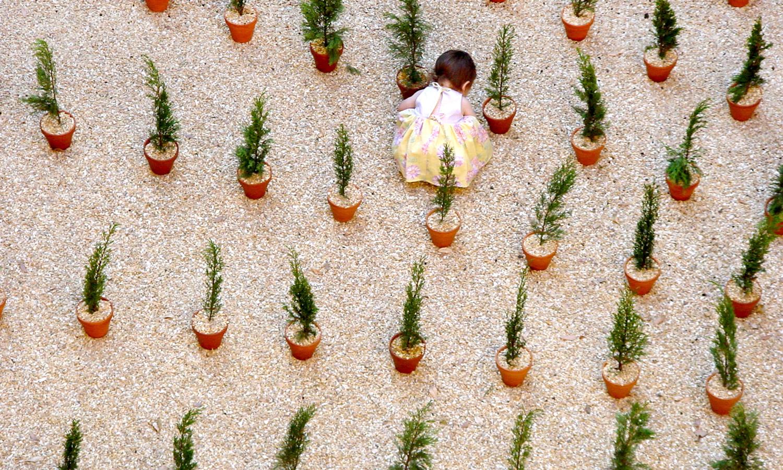 Cypress_2.jpg