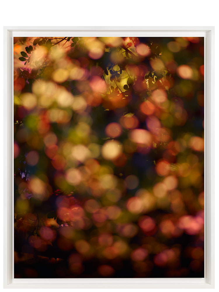 Marcus Tomlinson   Bloom  2019 C-type 129 x 105 cm