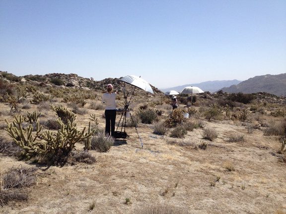 Painting in Anza-Borrego.