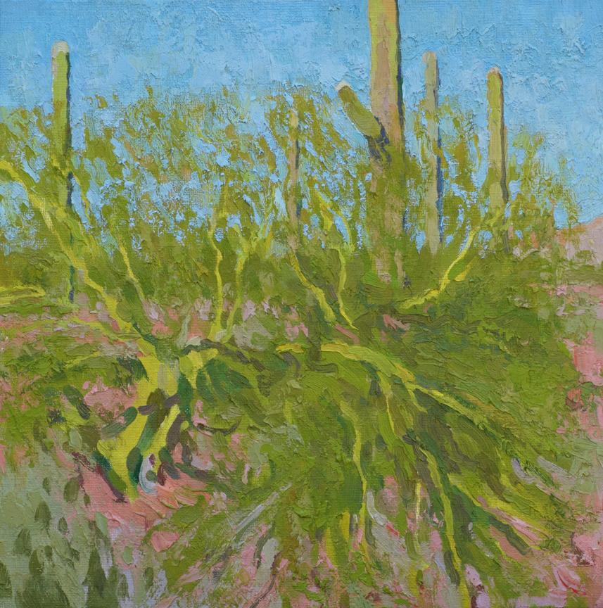 Palo Verde in the Sun, 12x12