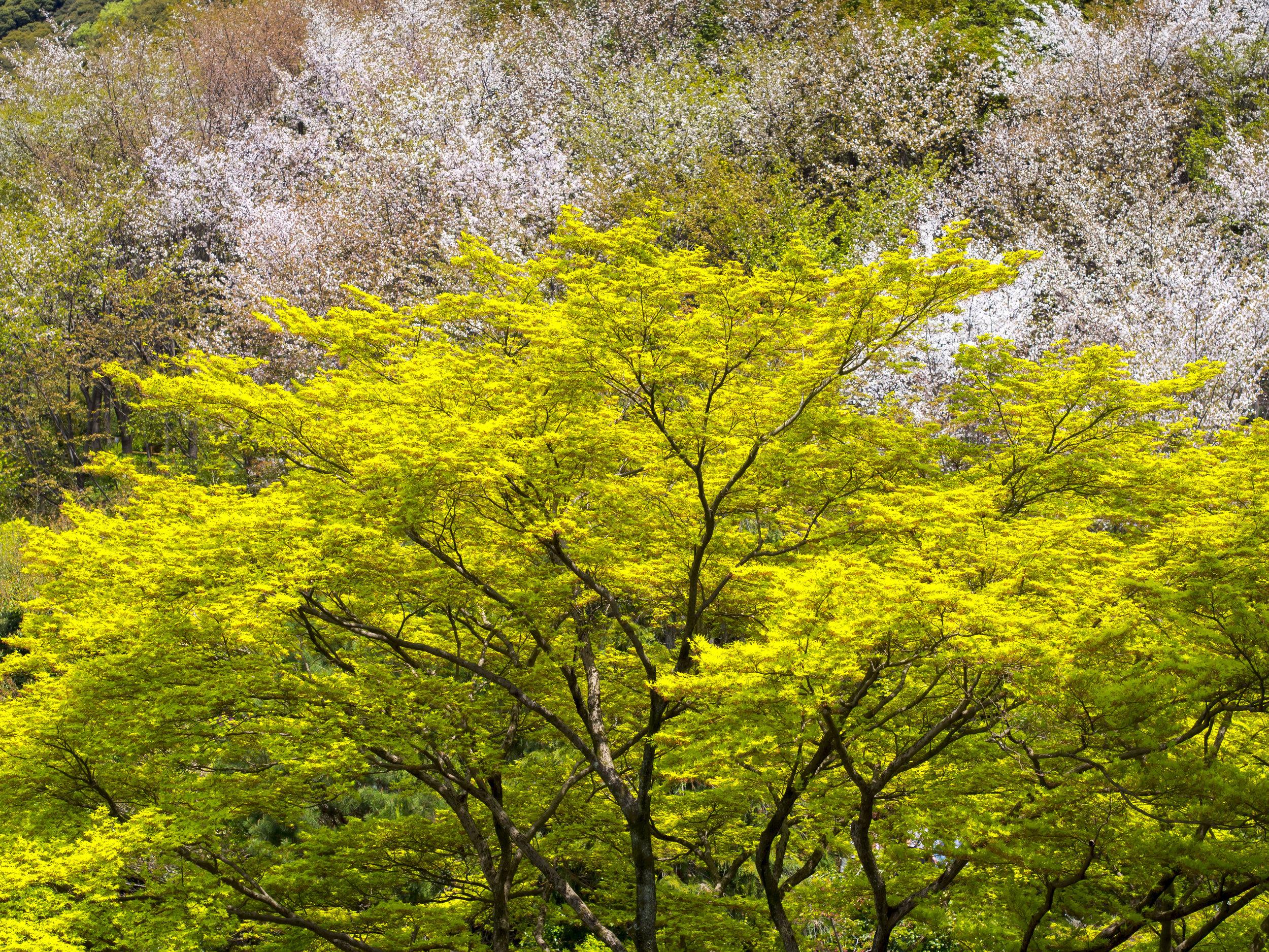 Hills of Kyoto. OMD 45mm